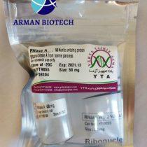 آنزیم RNase A یا ریبونوکلئاز A یکتا تجهیز (RNase A, Ribonuclease A)